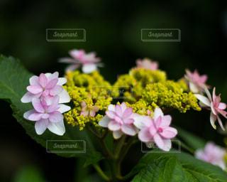 近くの花のアップの写真・画像素材[1215724]