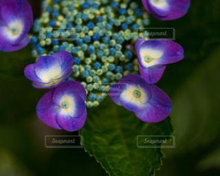 近くの花のアップの写真・画像素材[1215726]