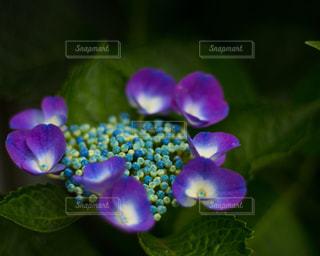 近くの花のアップの写真・画像素材[1215727]