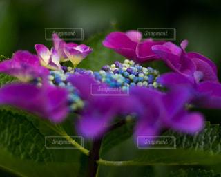 近くの花のアップの写真・画像素材[1215728]