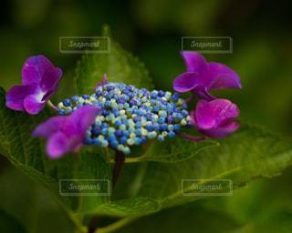 近くの花のアップの写真・画像素材[1215729]