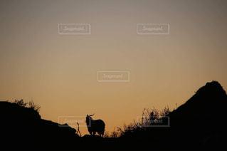 夕焼け空に浮かぶレソトの羊の写真・画像素材[824725]