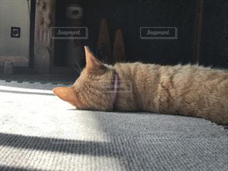 横になっている猫を後ろから撮った写真の写真・画像素材[811940]