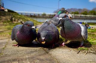 草の中のカラフルな鳥立ちの写真・画像素材[812067]