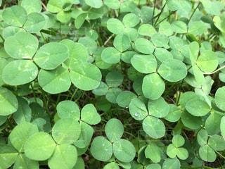 緑の植物のグループの写真・画像素材[815844]