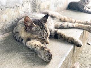 猫島(青島)の猫たちの写真・画像素材[812574]