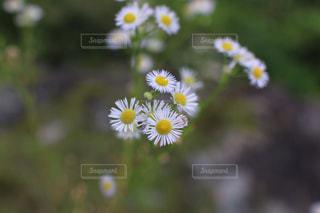 近くの花のアップの写真・画像素材[815554]