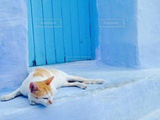 青の街シャフシャウエンと猫の写真・画像素材[812877]