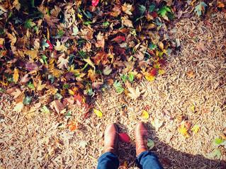 秋の午後の写真・画像素材[838489]