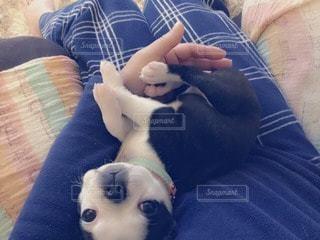 犬の写真・画像素材[25004]