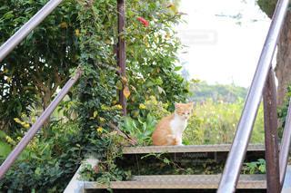 自然と猫の写真・画像素材[814309]