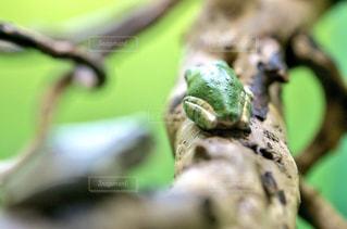カエルのおしりの写真・画像素材[1010330]