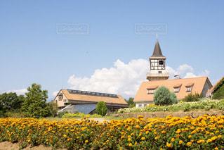 家の前に黄色い花の写真・画像素材[1818869]