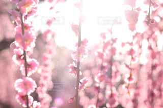 近くの花のアップの写真・画像素材[1103255]