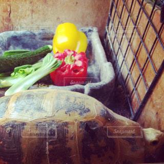 パプリカ(エロンガータリクガメの食事)の写真・画像素材[814291]
