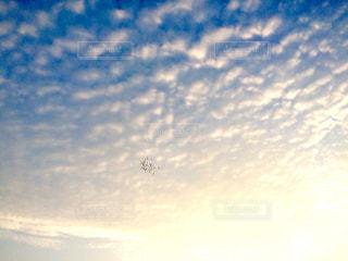 飛翔の写真・画像素材[814107]