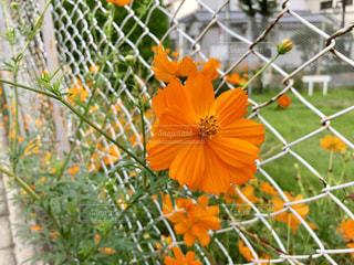 花の写真・画像素材[1464782]