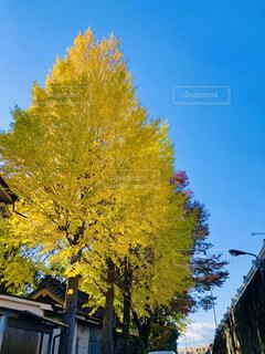 木のクローズアップの写真・画像素材[4447494]