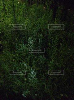 フォレスト内のツリーの写真・画像素材[814467]