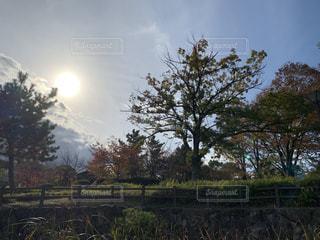 太陽の光の写真・画像素材[1636437]