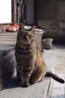 小さな神社の前に座る猫の写真・画像素材[816110]