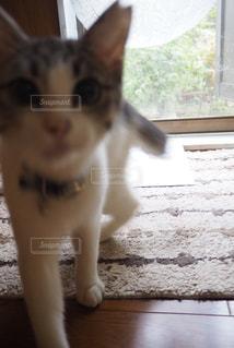 子猫アップの写真・画像素材[816993]