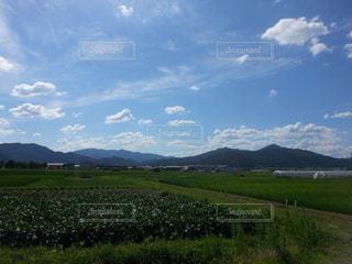 快晴の農場の写真・画像素材[817592]