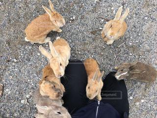 ぞわぞわと寄ってくるウサギの写真・画像素材[822418]