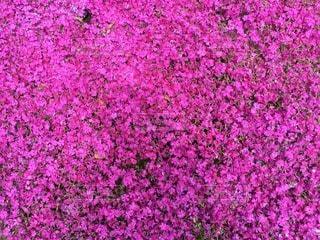 お花畑の写真・画像素材[27292]