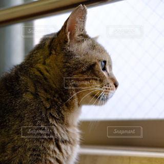 窓の前に座っている猫 - No.815600