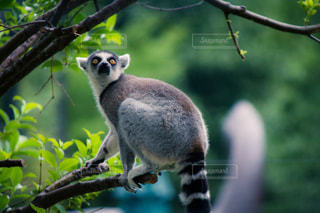 枝に小動物の写真・画像素材[816217]