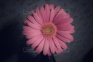 花のアップの写真・画像素材[858215]