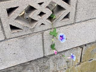 近くの石造りの建物の写真・画像素材[817359]
