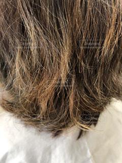 ダメージ毛のアップ写真の写真・画像素材[2180859]