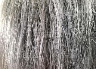 白髪のアップ写真の写真・画像素材[3515007]