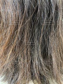 ゴワつく髪質の髪の写真の写真・画像素材[4173348]