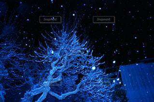 夜に降る雪の写真・画像素材[821154]