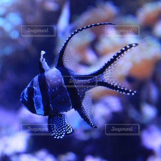 熱帯魚のアップの写真・画像素材[817600]