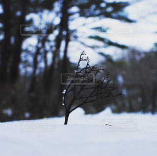 雪の覆われた斜面上を飛んでいる鳥 - No.916499