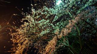 感情の夜の写真・画像素材[2230430]