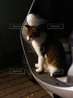 猫 - No.828598