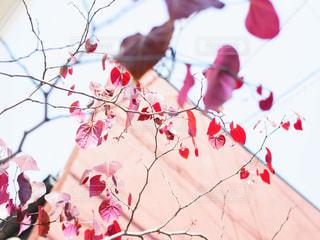 秋の写真・画像素材[828611]