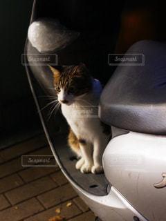 猫 - No.828616