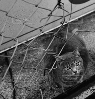 猫の写真・画像素材[828660]