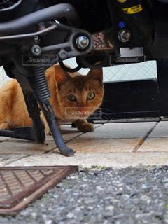 猫の写真・画像素材[828667]