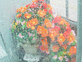 花の写真・画像素材[828723]
