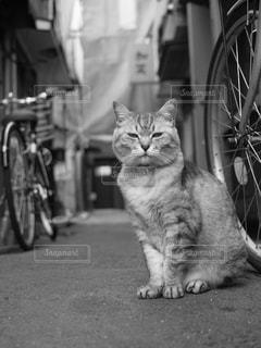 猫の写真・画像素材[828909]