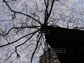 空の写真・画像素材[828983]