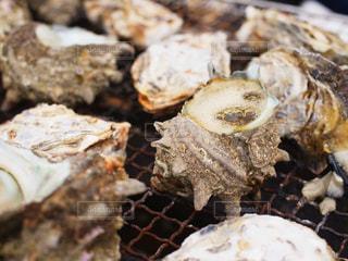 牡蠣の写真・画像素材[829039]