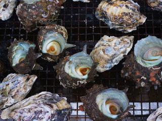 牡蠣の写真・画像素材[829050]